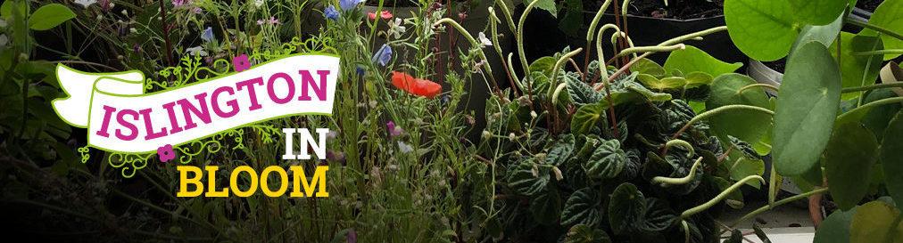 Islington in Bloom winners announced